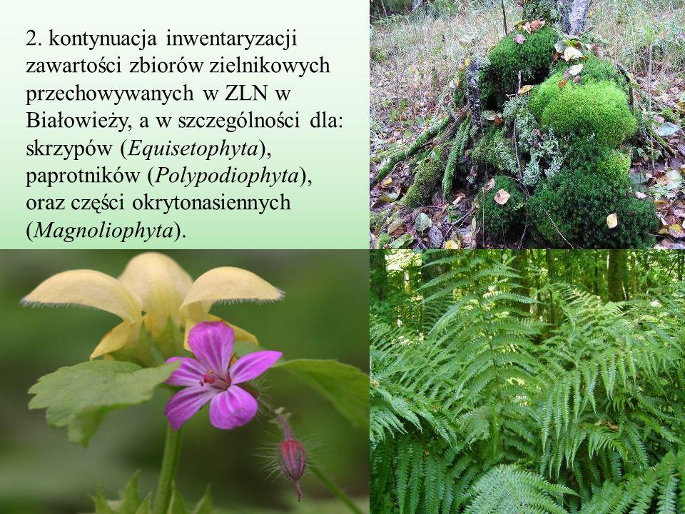 2. kontynuacja inwentaryzacji zawartości zbiorów zielnikowych przechowywanych w ZLN w Białowieży, a w szczególności dla: skrzypów (Equisetophyta), pap
