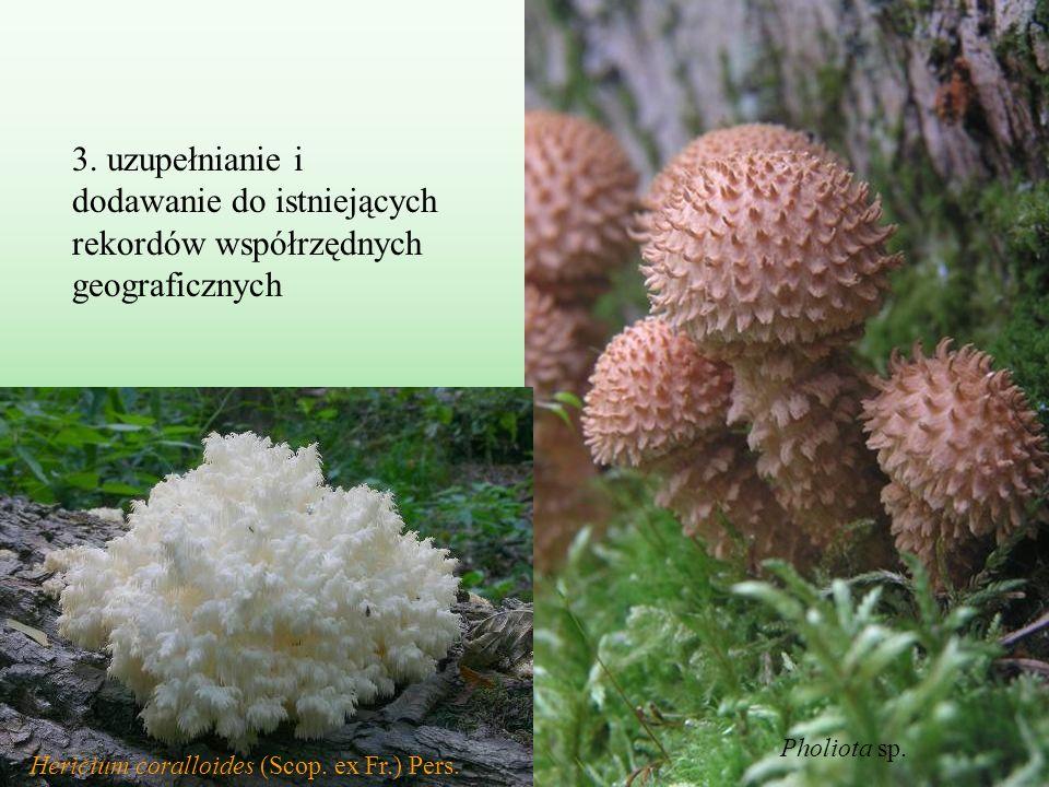 3. uzupełnianie i dodawanie do istniejących rekordów współrzędnych geograficznych Pholiota sp. Hericium coralloides (Scop. ex Fr.) Pers.