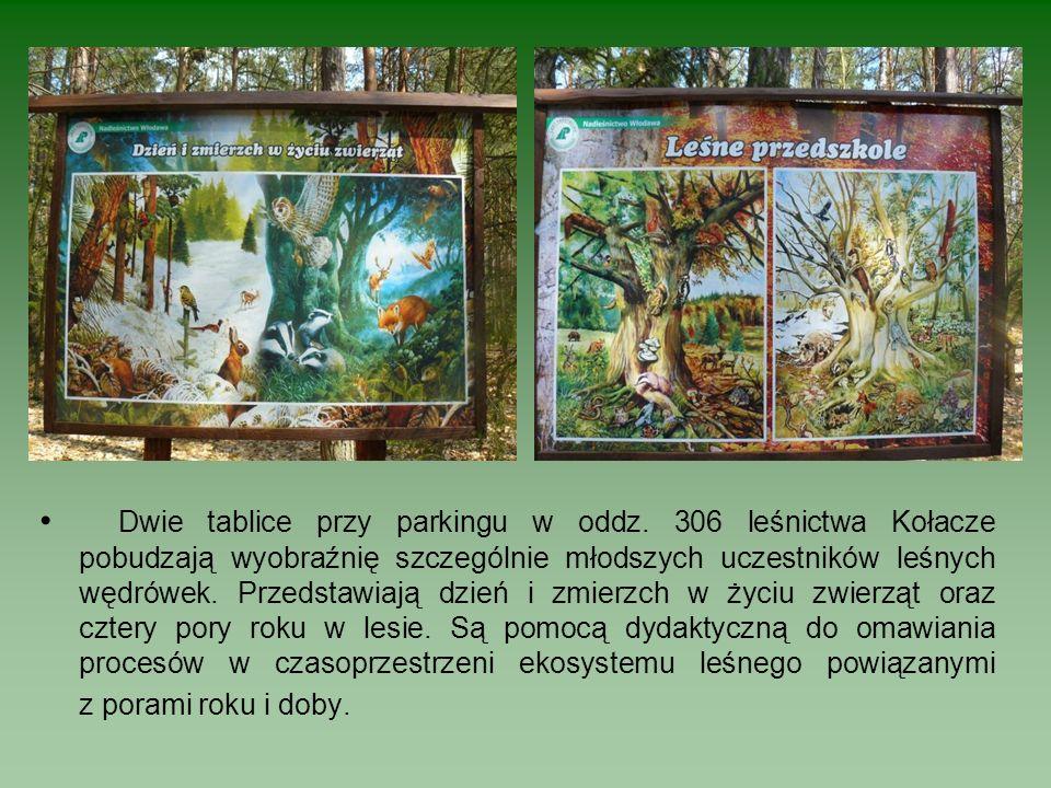 Dwie tablice przy parkingu w oddz. 306 leśnictwa Kołacze pobudzają wyobraźnię szczególnie młodszych uczestników leśnych wędrówek. Przedstawiają dzień