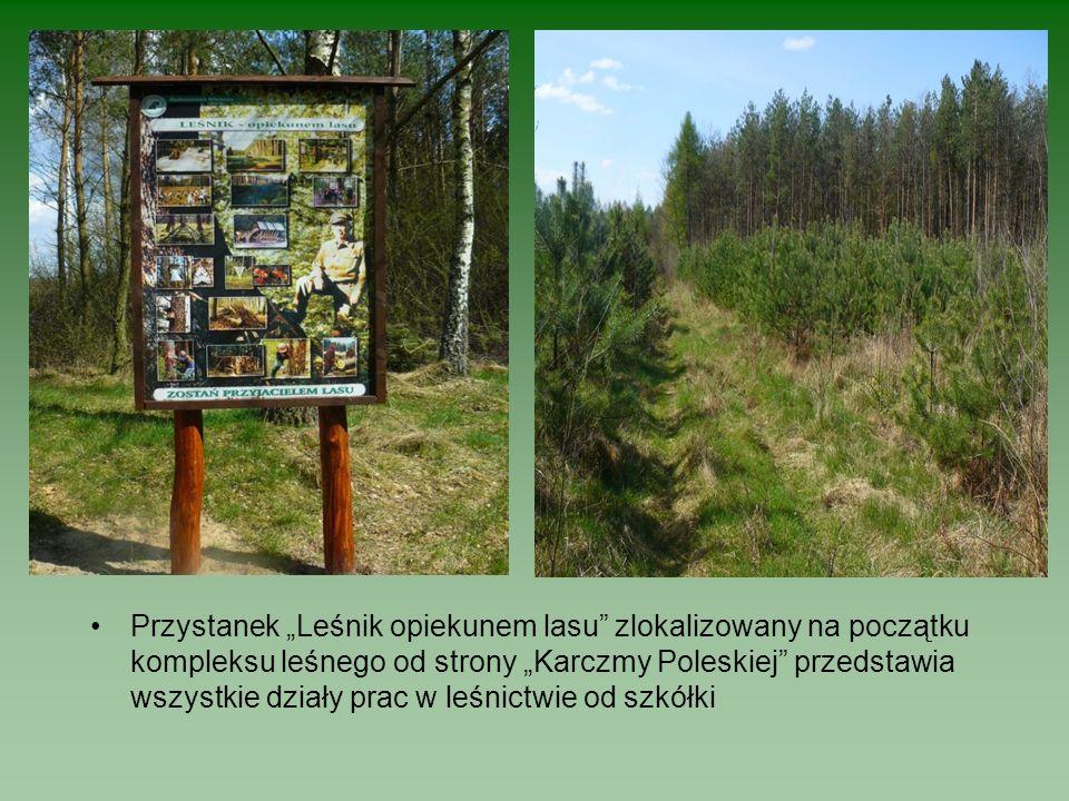Przystanek Leśnik opiekunem lasu zlokalizowany na początku kompleksu leśnego od strony Karczmy Poleskiej przedstawia wszystkie działy prac w leśnictwie od szkółki