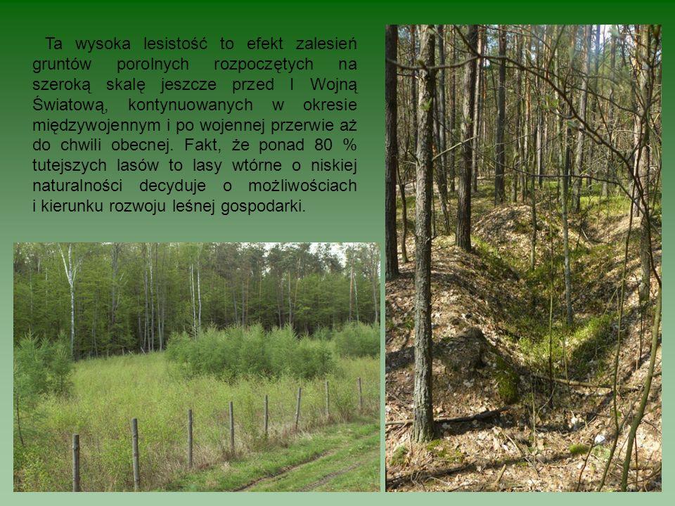 Ta wysoka lesistość to efekt zalesień gruntów porolnych rozpoczętych na szeroką skalę jeszcze przed I Wojną Światową, kontynuowanych w okresie międzywojennym i po wojennej przerwie aż do chwili obecnej.
