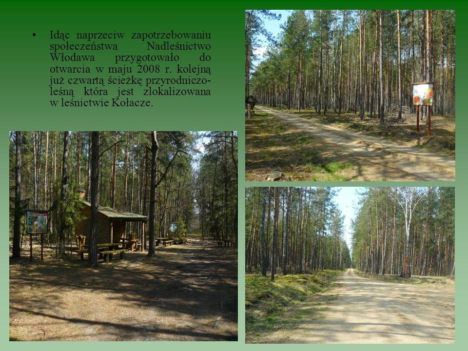 Idąc naprzeciw zapotrzebowaniu społeczeństwa Nadleśnictwo Włodawa przygotowało do otwarcia w maju 2008 r. kolejną już czwartą ścieżkę przyrodniczo- le