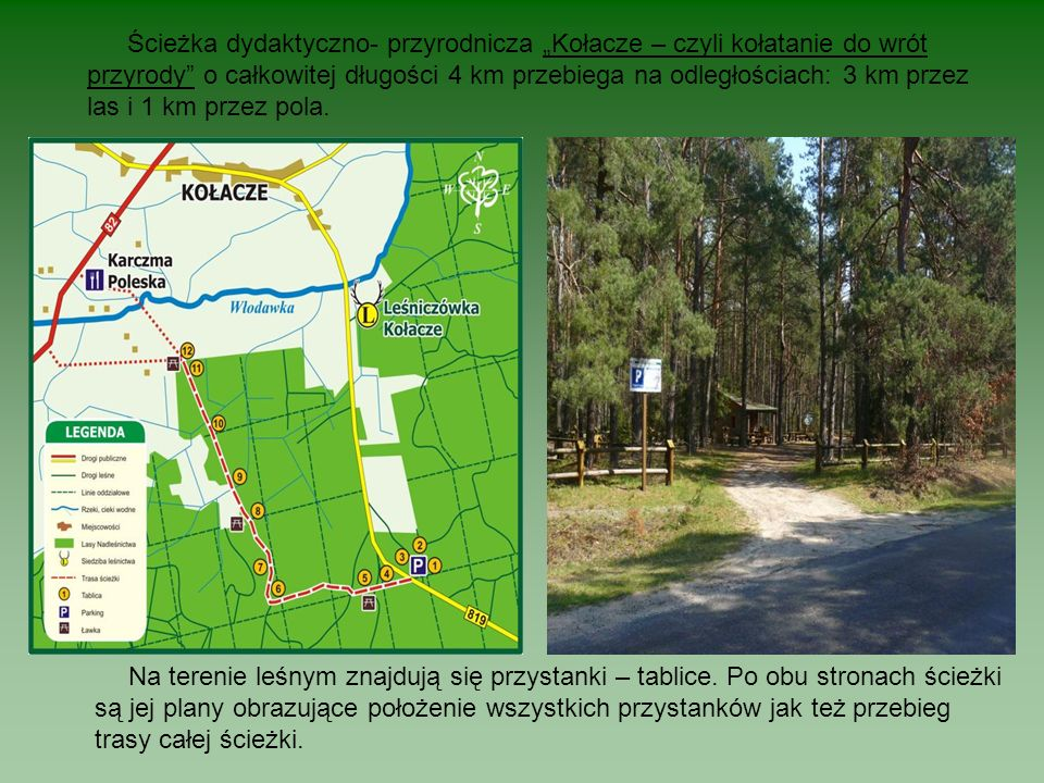 Ścieżka dydaktyczno- przyrodnicza Kołacze – czyli kołatanie do wrót przyrody o całkowitej długości 4 km przebiega na odległościach: 3 km przez las i 1