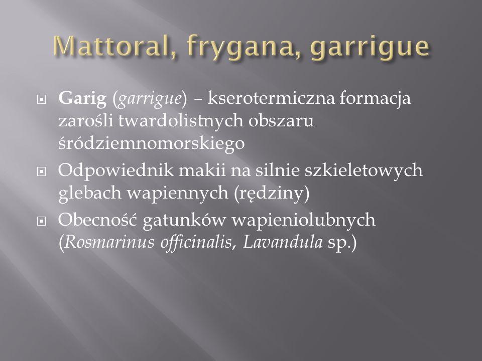 Garig ( garrigue ) – kserotermiczna formacja zarośli twardolistnych obszaru śródziemnomorskiego Odpowiednik makii na silnie szkieletowych glebach wapi