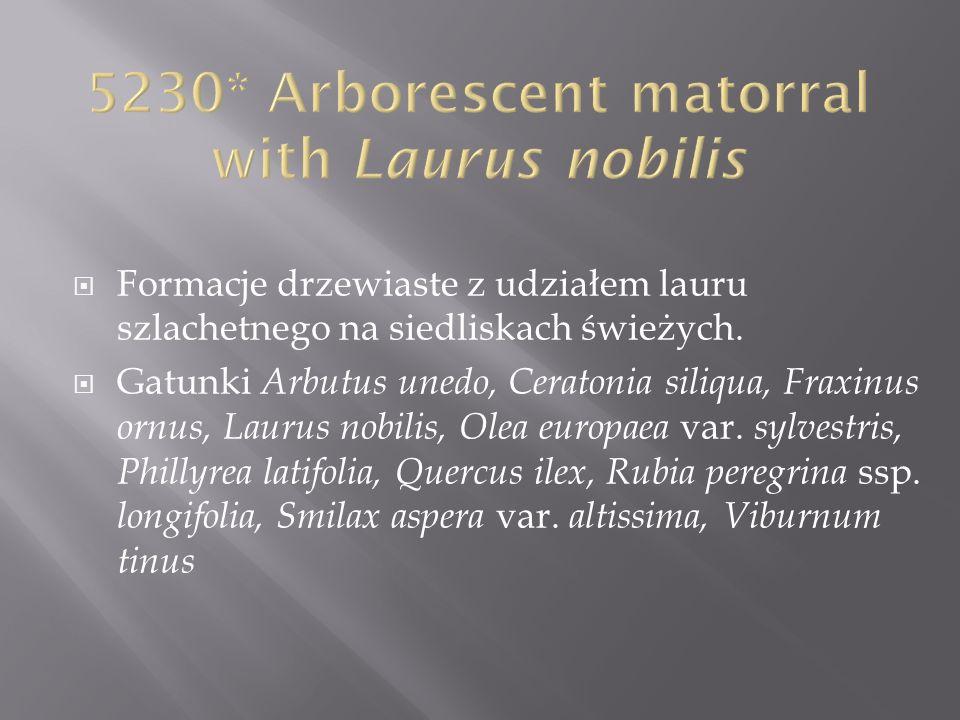 Formacje drzewiaste z udziałem lauru szlachetnego na siedliskach świeżych. Gatunki Arbutus unedo, Ceratonia siliqua, Fraxinus ornus, Laurus nobilis, O