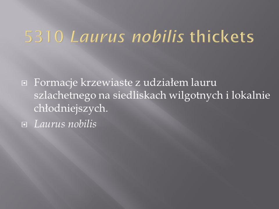 Formacje krzewiaste z udziałem lauru szlachetnego na siedliskach wilgotnych i lokalnie chłodniejszych. Laurus nobilis