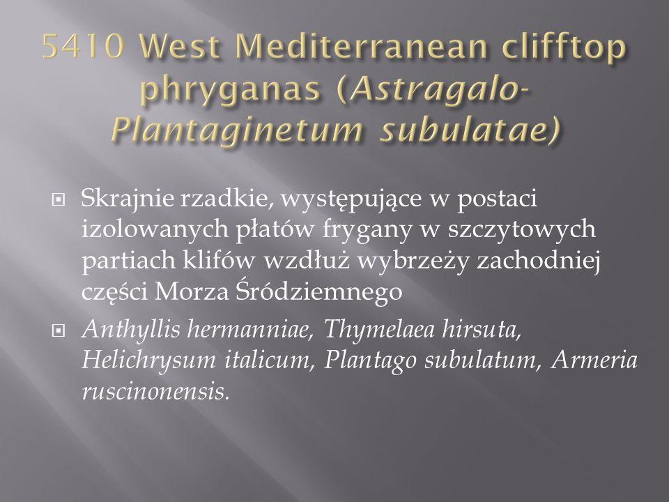 Skrajnie rzadkie, występujące w postaci izolowanych płatów frygany w szczytowych partiach klifów wzdłuż wybrzeży zachodniej części Morza Śródziemnego