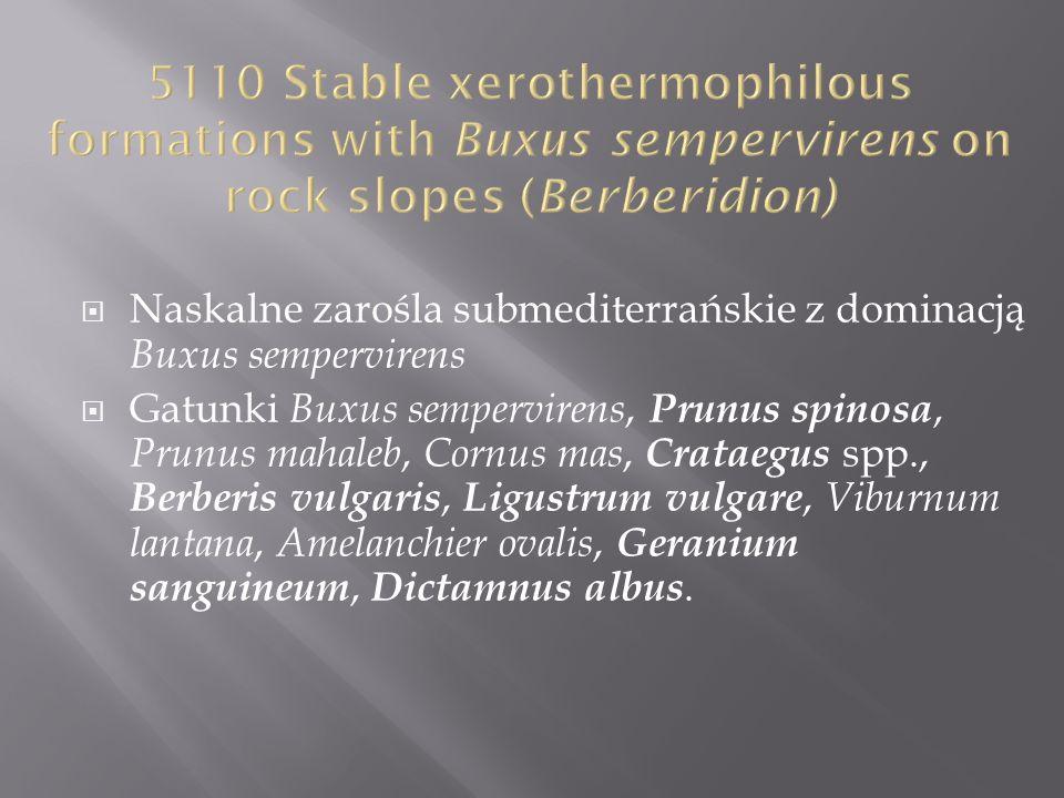 Naskalne zarośla submediterrańskie z dominacją Buxus sempervirens Gatunki Buxus sempervirens, Prunus spinosa, Prunus mahaleb, Cornus mas, Crataegus sp