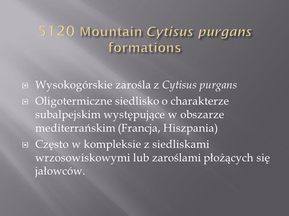 Suchoroślowe formacje złożone z niskich, często półkulistych krzewów o silnie kserotermicznym charakterze, zwykle na południowych wystawach i płytkich podłożach skalnych Silnie zróżnicowane w zależności od regionu (szereg podtypów).