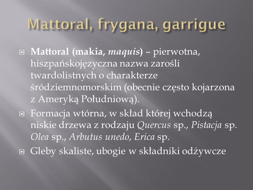 Garig ( garrigue ) – kserotermiczna formacja zarośli twardolistnych obszaru śródziemnomorskiego Odpowiednik makii na silnie szkieletowych glebach wapiennych (rędziny) Obecność gatunków wapieniolubnych ( Rosmarinus officinalis, Lavandula sp.)