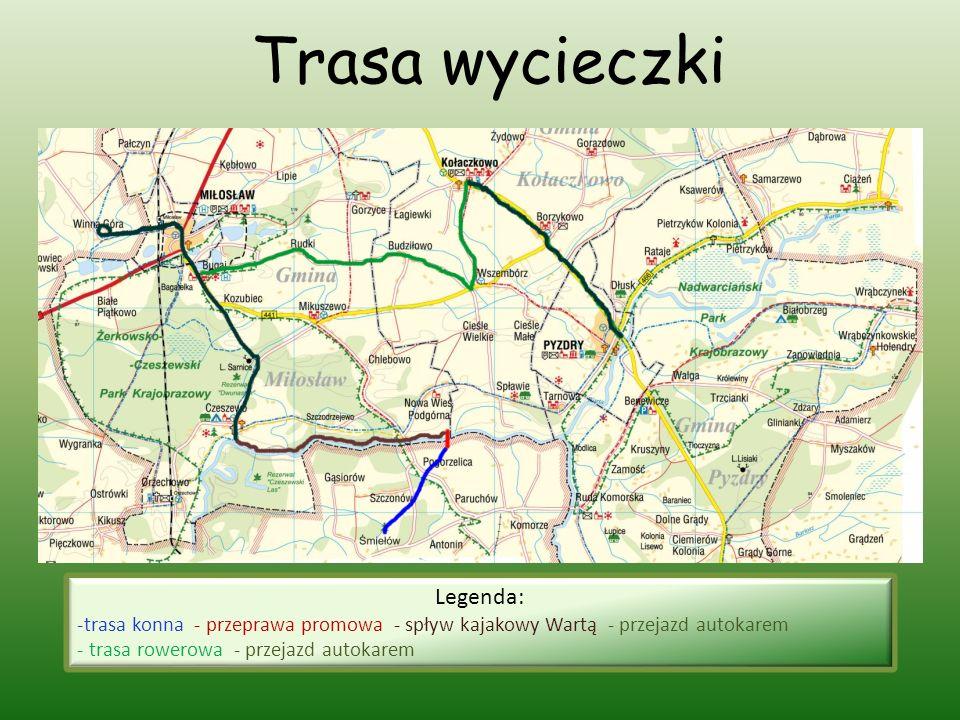 Trasa wycieczki Legenda: -trasa konna - przeprawa promowa - spływ kajakowy Wartą - przejazd autokarem - trasa rowerowa - przejazd autokarem