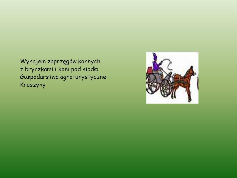 Wynajem zaprzęgów konnych z bryczkami i koni pod siodło Gospodarstwo agroturystyczne Kruszyny