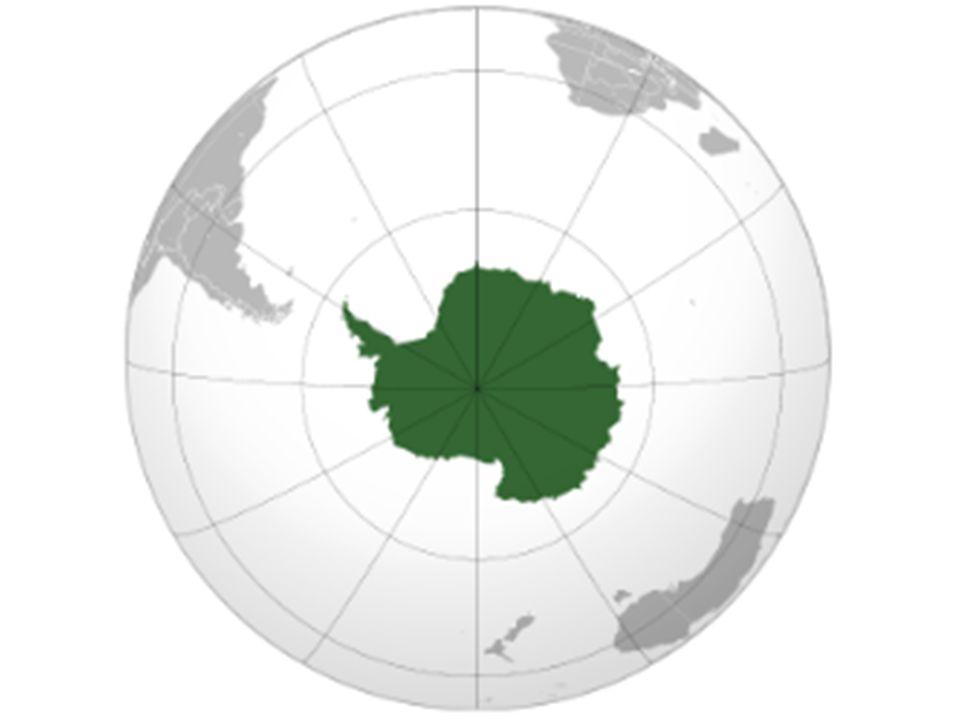 Zwierzęta Antarktydy i ich przystosowania