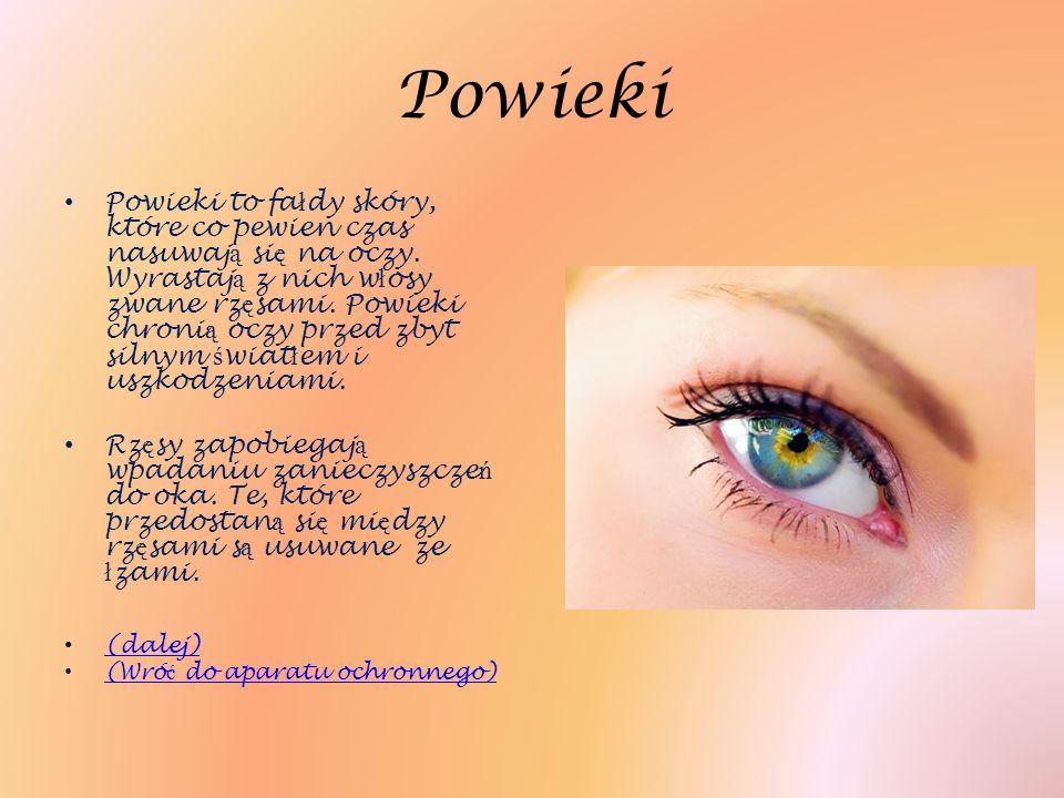 Powieki Powieki to fa ł dy skóry, które co pewien czas nasuwaj ą si ę na oczy. Wyrastaj ą z nich w ł osy zwane rz ę sami. Powieki chroni ą oczy przed
