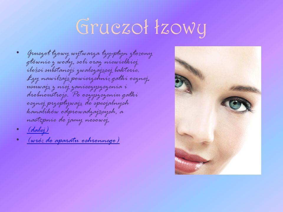 Spojówka Spojówka to cienka błona, która pokrywa wewn ę trzn ą powierzchni ę powieki oraz cz ęść przedniej powierzchni gałki ocznej.