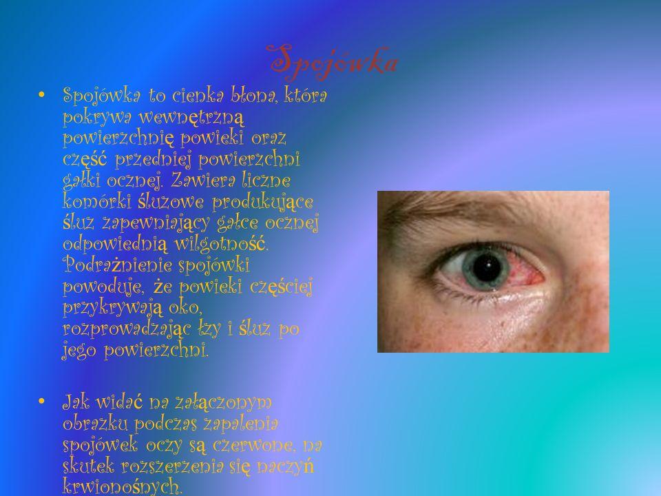 Spojówka Spojówka to cienka błona, która pokrywa wewn ę trzn ą powierzchni ę powieki oraz cz ęść przedniej powierzchni gałki ocznej. Zawiera liczne ko