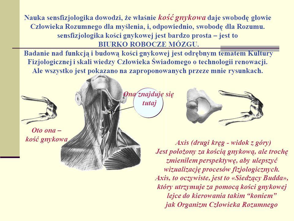 Nauka sensfizjologika dowodzi, że właśnie kość gnykowa daje swobodę głowie Człowieka Rozumnego dla myślenia, i, odpowiednio, swobodę dla Rozumu. sensf