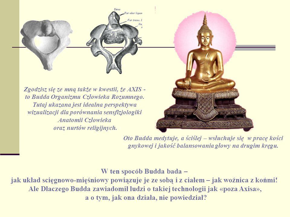 Zgodzisz się ze mną także w kwestii, że AXIS - to Budda Organizmu Człowieka Rozumnego. Tutaj ukazana jest idealna perspektywa wizualizacji dla porówna