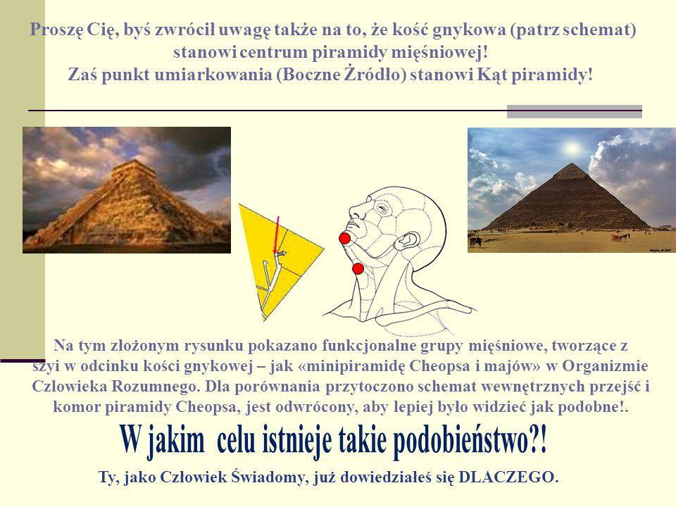 Proszę Cię, byś zwrócił uwagę także na to, że kość gnykowa (patrz schemat) stanowi centrum piramidy mięśniowej! Zaś punkt umiarkowania (Boczne Żródło)