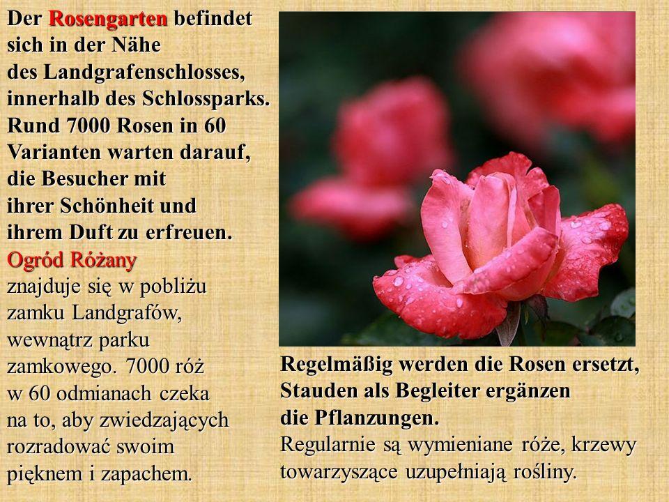 Regelmäßig werden die Rosen ersetzt, Stauden als Begleiter ergänzen die Pflanzungen.