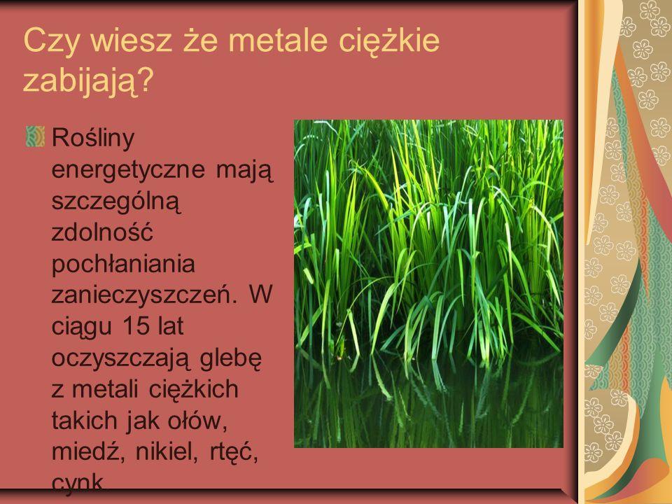 Czy wiesz że metale ciężkie zabijają? Rośliny energetyczne mają szczególną zdolność pochłaniania zanieczyszczeń. W ciągu 15 lat oczyszczają glebę z me