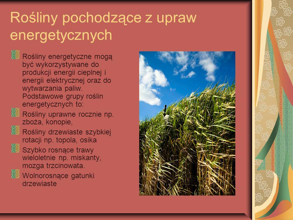 Rośliny pochodzące z upraw energetycznych Rośliny energetyczne mogą być wykorzystywane do produkcji energii cieplnej i energii elektrycznej oraz do wy