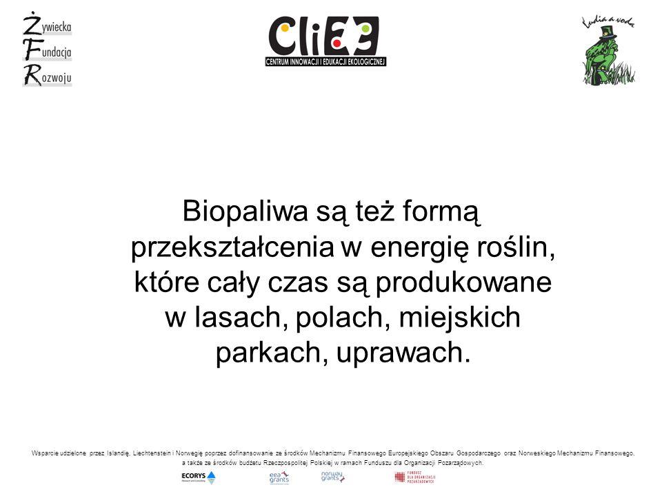 , Biopaliwa są też formą przekształcenia w energię roślin, które cały czas są produkowane w lasach, polach, miejskich parkach, uprawach.