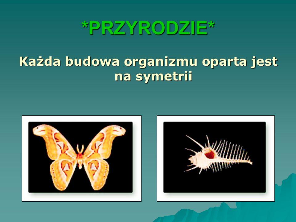*PRZYRODZIE* Każda budowa organizmu oparta jest na symetrii