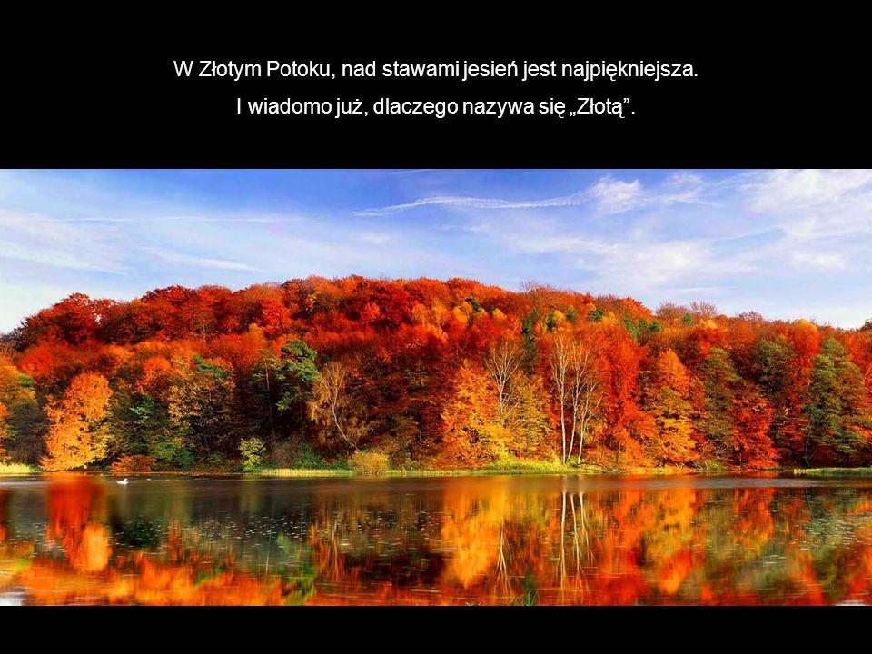 W Złotym Potoku, nad stawami jesień jest najpiękniejsza. I wiadomo już, dlaczego nazywa się Złotą.