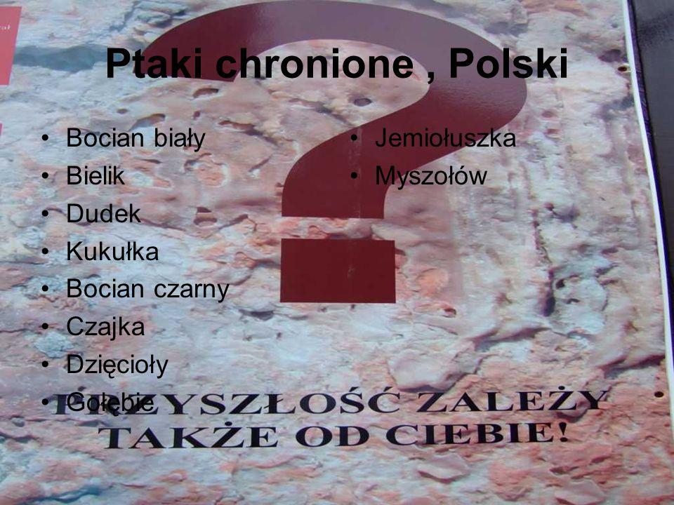 Ptaki chronione, Polski Bocian biały Bielik Dudek Kukułka Bocian czarny Czajka Dzięcioły Gołębie Jemiołuszka Myszołów