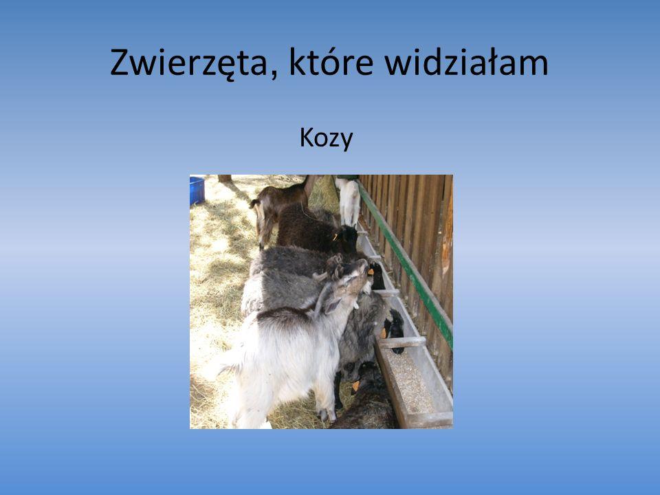 Zwierzęta, które widziałam Kozy