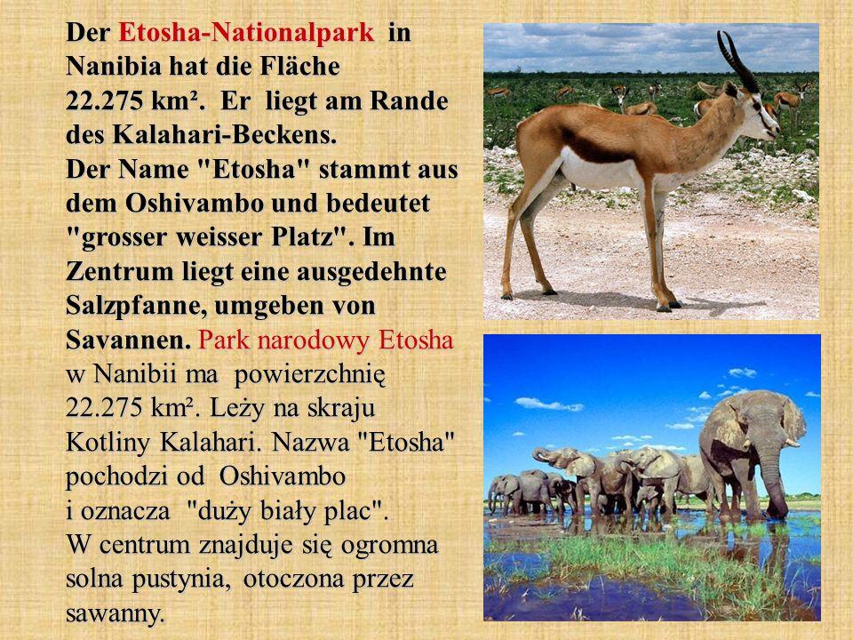 Der Etosha-Nationalpark in Nanibia hat die Fläche 22.275 km². Er liegt am Rande des Kalahari-Beckens. Der Name