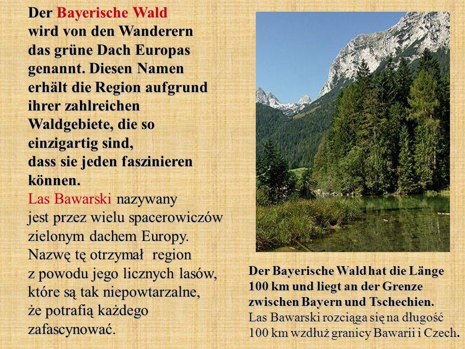 Der Bayerische Wald wird von den Wanderern das grüne Dach Europas genannt. Diesen Namen erhält die Region aufgrund ihrer zahlreichen Waldgebiete, die