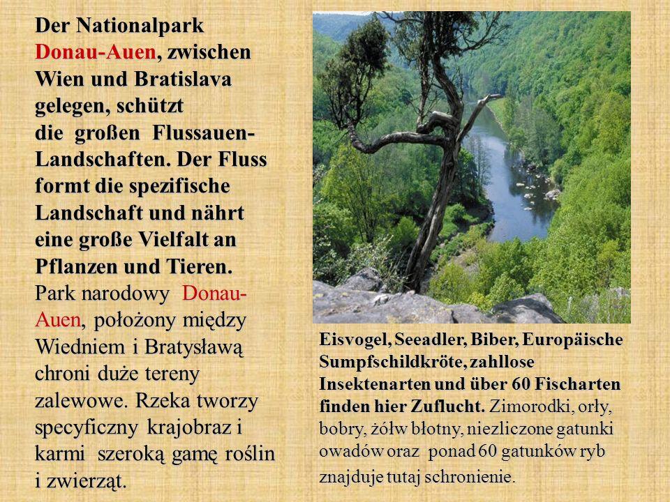 Der Nationalpark Donau-Auen, zwischen Wien und Bratislava gelegen, schützt die großen Flussauen- Landschaften. Der Fluss formt die spezifische Landsch