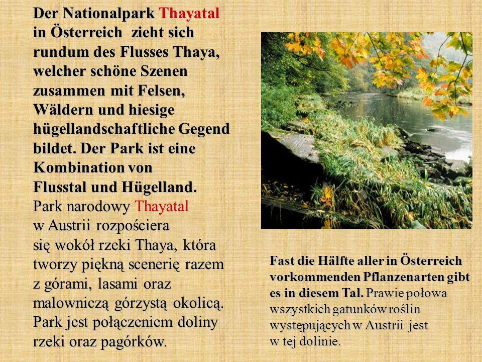 Der Nationalpark Thayatal in Österreich zieht sich rundum des Flusses Thaya, welcher schöne Szenen zusammen mit Felsen, Wäldern und hiesige hügellands