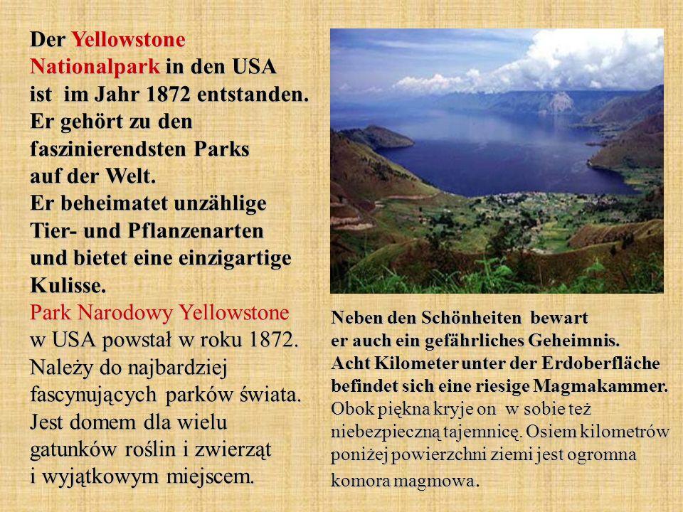 Der Yellowstone Nationalpark in den USA ist im Jahr 1872 entstanden. Er gehört zu den faszinierendsten Parks auf der Welt. Er beheimatet unzählige Tie