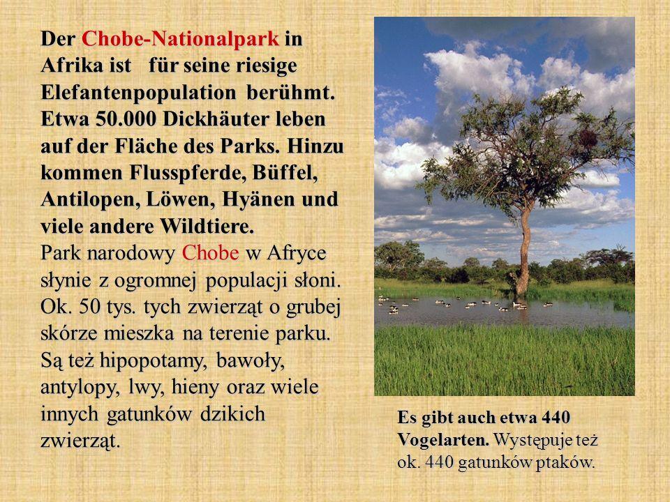 Der Chobe-Nationalpark in Afrika ist für seine riesige Elefantenpopulation berühmt. Etwa 50.000 Dickhäuter leben auf der Fläche des Parks. Hinzu komme