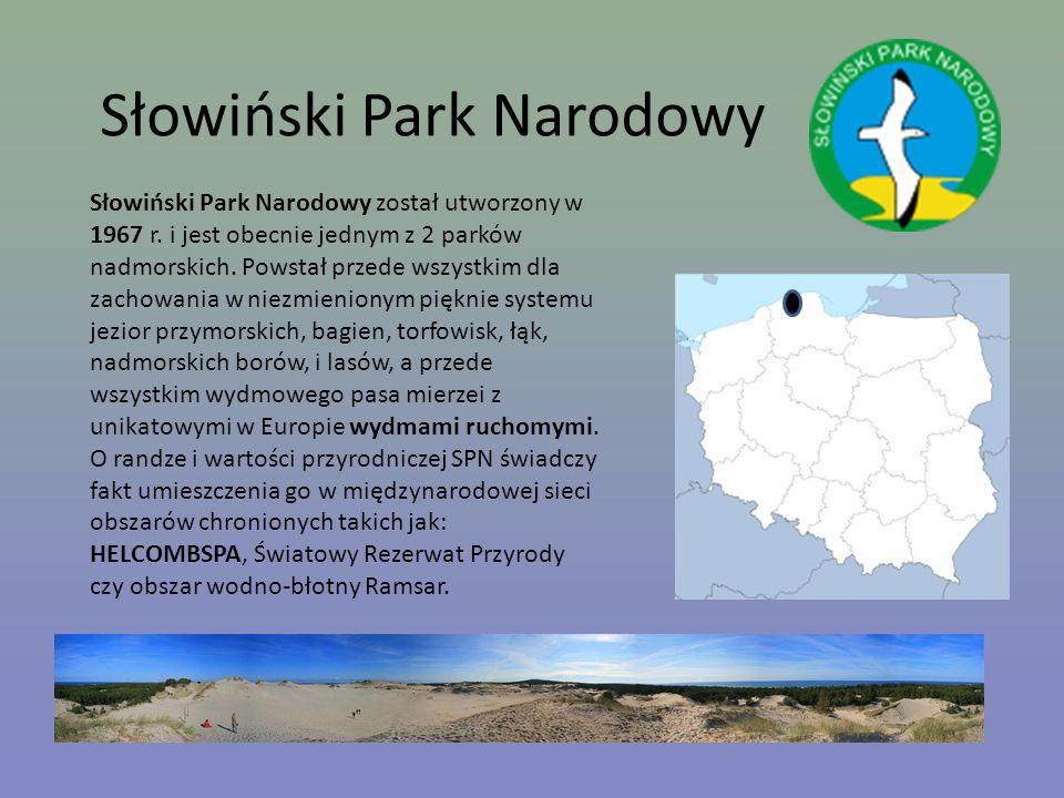 Słowiński Park Narodowy Słowiński Park Narodowy został utworzony w 1967 r. i jest obecnie jednym z 2 parków nadmorskich. Powstał przede wszystkim dla