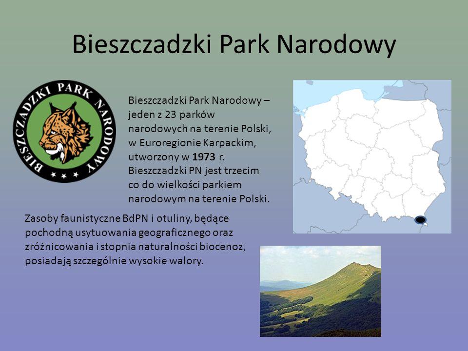 Bieszczadzki Park Narodowy Bieszczadzki Park Narodowy – jeden z 23 parków narodowych na terenie Polski, w Euroregionie Karpackim, utworzony w 1973 r.