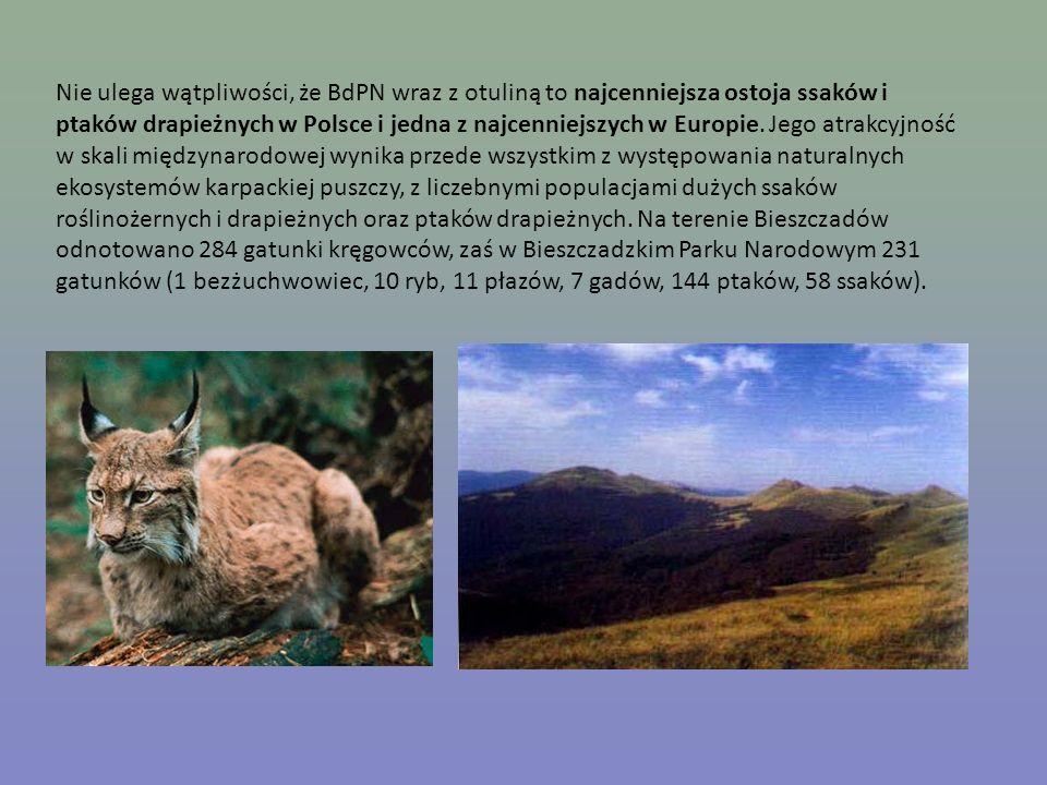 Nie ulega wątpliwości, że BdPN wraz z otuliną to najcenniejsza ostoja ssaków i ptaków drapieżnych w Polsce i jedna z najcenniejszych w Europie. Jego a