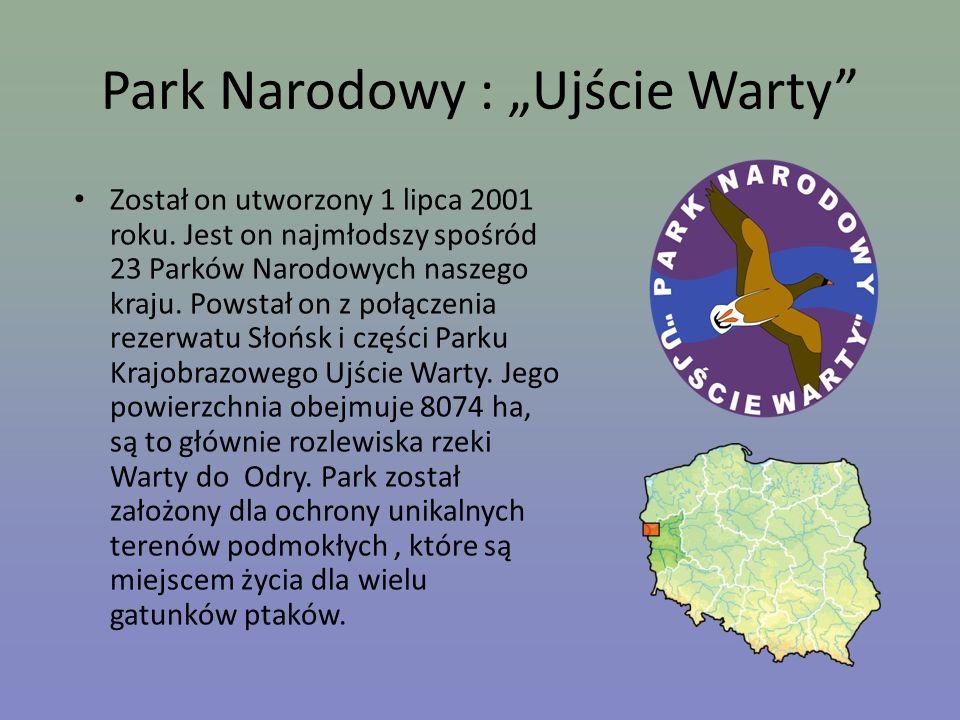 Park Narodowy : Ujście Warty Został on utworzony 1 lipca 2001 roku. Jest on najmłodszy spośród 23 Parków Narodowych naszego kraju. Powstał on z połącz