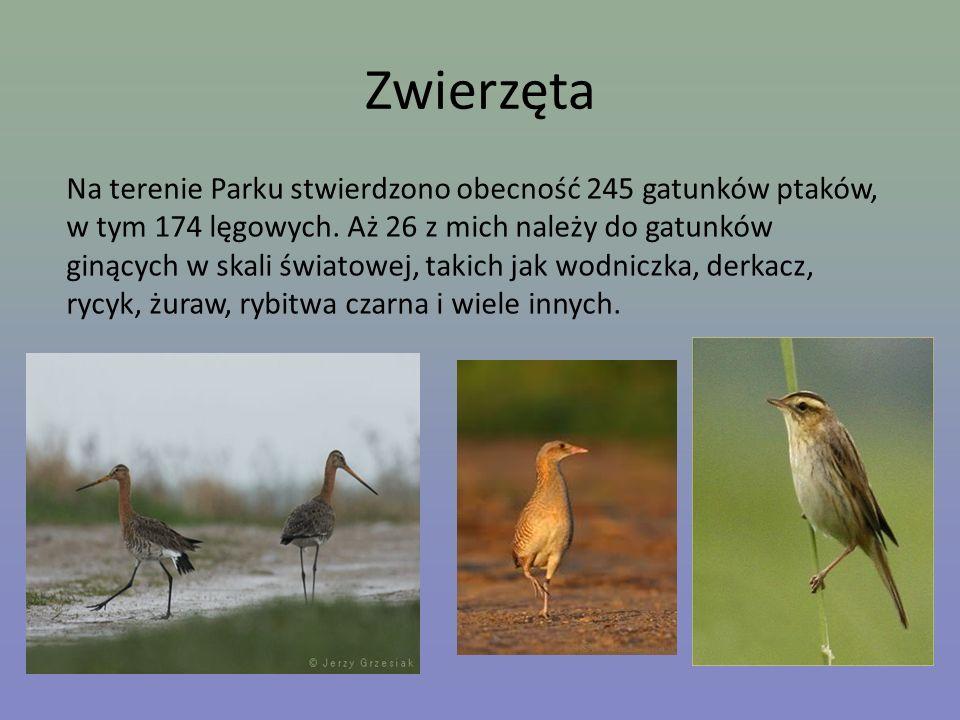 Zwierzęta Na terenie Parku stwierdzono obecność 245 gatunków ptaków, w tym 174 lęgowych. Aż 26 z mich należy do gatunków ginących w skali światowej, t