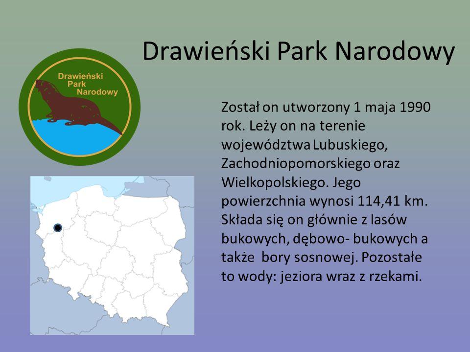 Drawieński Park Narodowy Został on utworzony 1 maja 1990 rok. Leży on na terenie województwa Lubuskiego, Zachodniopomorskiego oraz Wielkopolskiego. Je