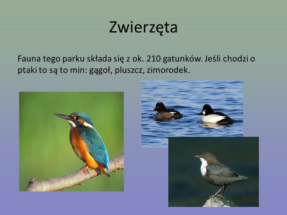 Zwierzęta Fauna tego parku składa się z ok. 210 gatunków. Jeśli chodzi o ptaki to są to min: gągoł, pluszcz, zimorodek.