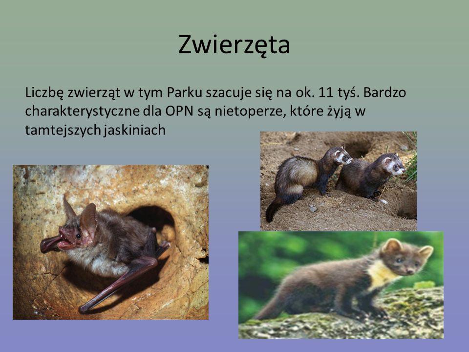 Zwierzęta Liczbę zwierząt w tym Parku szacuje się na ok. 11 tyś. Bardzo charakterystyczne dla OPN są nietoperze, które żyją w tamtejszych jaskiniach