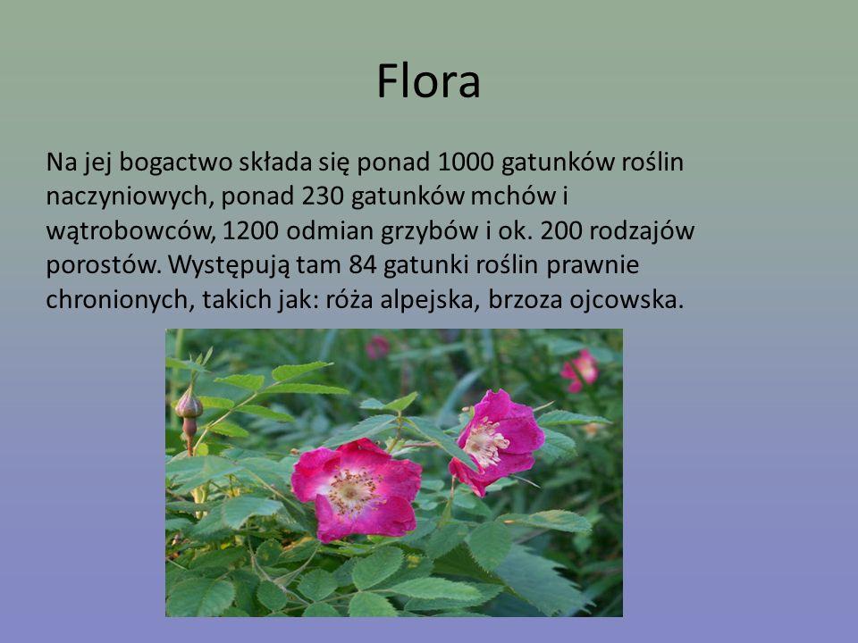 Flora Na jej bogactwo składa się ponad 1000 gatunków roślin naczyniowych, ponad 230 gatunków mchów i wątrobowców, 1200 odmian grzybów i ok. 200 rodzaj