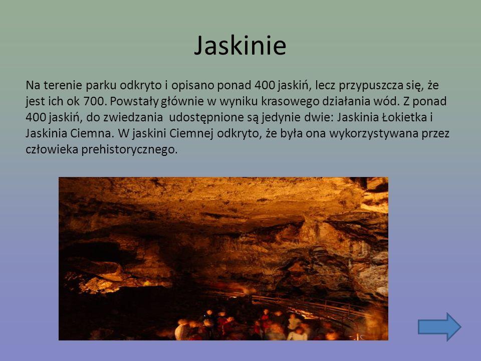 Jaskinie Na terenie parku odkryto i opisano ponad 400 jaskiń, lecz przypuszcza się, że jest ich ok 700. Powstały głównie w wyniku krasowego działania