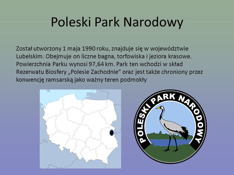 Poleski Park Narodowy Został utworzony 1 maja 1990 roku, znajduje się w województwie Lubelskim. Obejmuje on liczne bagna, torfowiska i jeziora krasowe