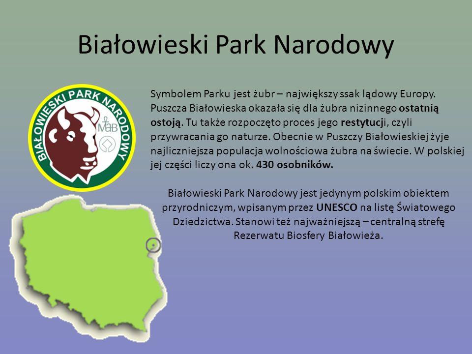 Białowieski Park Narodowy Symbolem Parku jest żubr – największy ssak lądowy Europy. Puszcza Białowieska okazała się dla żubra nizinnego ostatnią ostoj