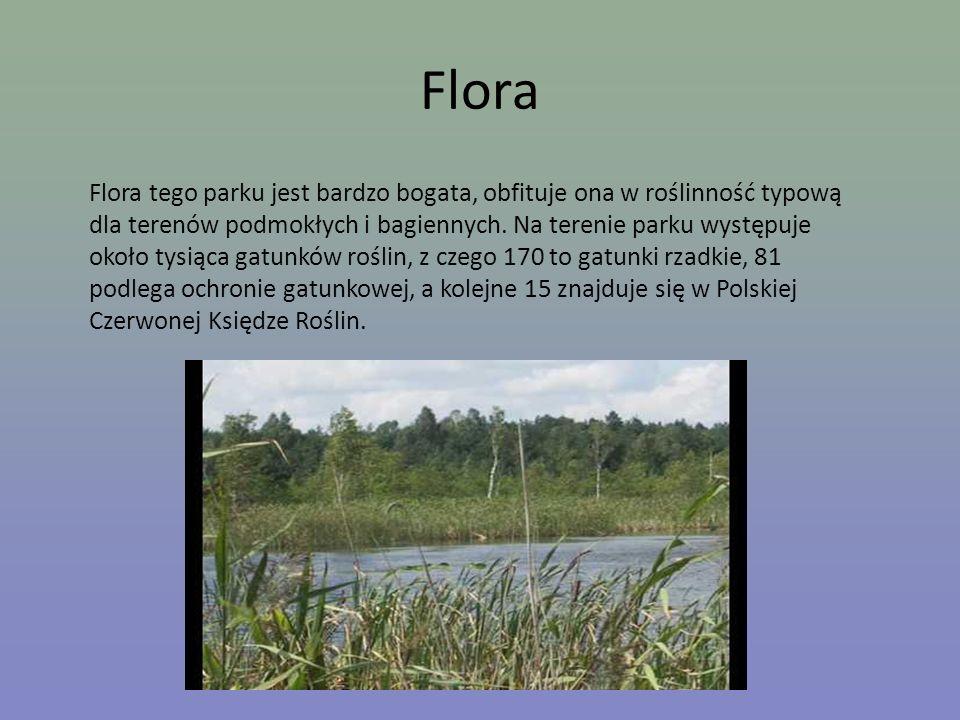 Flora Flora tego parku jest bardzo bogata, obfituje ona w roślinność typową dla terenów podmokłych i bagiennych. Na terenie parku występuje około tysi
